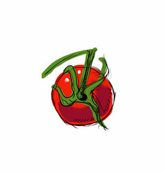 tomato on a white vector image