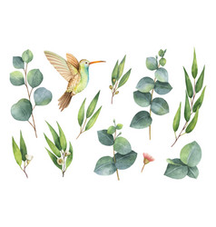 watercolor hand painted set with eucalyptus vector image vector image