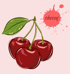 hand draw of cherry vector image vector image