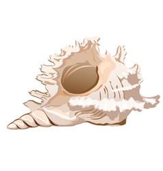 Beautiful seashell murex ramosus or chicoreus vector