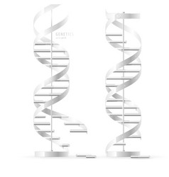 Dna double helix realistic structural models vector