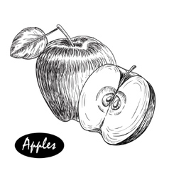 hand drawn apple Vintage sketch style vector image