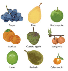 9 different fruits on a white background vector image