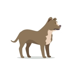 american pit bull terrier isolated on white vector image