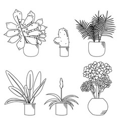 beautiful set of different plants in pots vector image