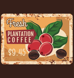coffee beans and berries rusty metal plate vector image