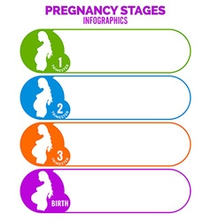 Pregnancy stages infographics template vector