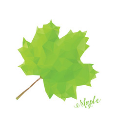 green maple leaf in low poly style vector image vector image
