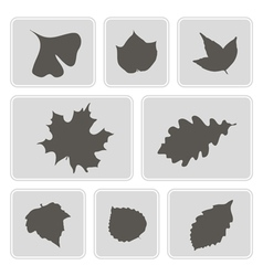 monochrome icons with different leaves vector image vector image