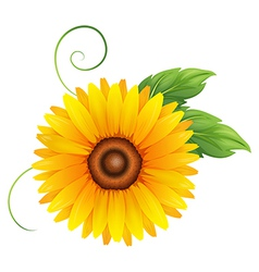 A fresh blooming yellow flower vector