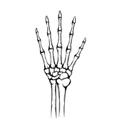 hand skeleton with joint and five fingers vector image