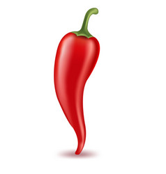 Hot pepper vector