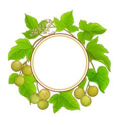 Kukui plant frame on white background vector