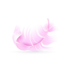 Pink feather exotic bird flamingo or parrot vector