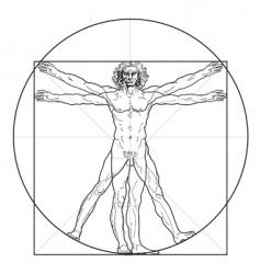The vitruvian man vector