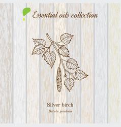 Birch essential oil label aromatic plant vector