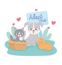 Adopt a pet cat in box little dog and kitten in vector