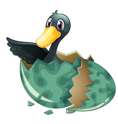 black duck hatching egg vector image