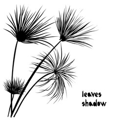 Black silhouette papyrus palm tropical leaves vector