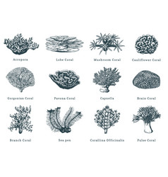 corals collection of vector image