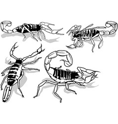 Desert Hairy Scorpion vector