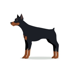 Doberman Pinscher Dobermann Doberman isolated vector image