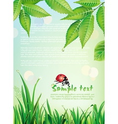natural background with ladybird vector image vector image