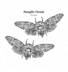 Platypleura kaempferi cicada hand draw sketch vector