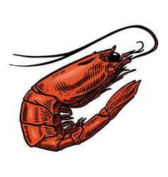 shrimp design element for poster banner card menu vector image