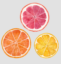 Watercolor citrus fruits vector