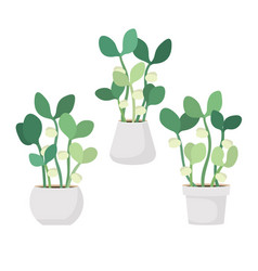 young fresh green sprouts in white pots vector image
