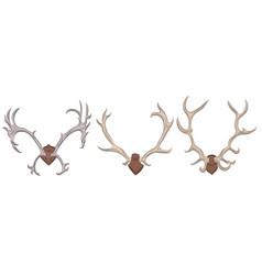 set of different deer antlers vector image