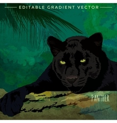 Wild Cats Panther vector