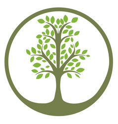 green tree of life in a circle vector image