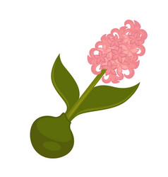 spring pink syringa flower with green stem and vector image vector image