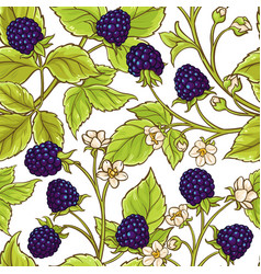 blackberry pattern vector image