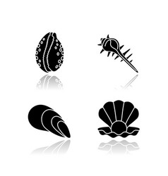 Different sea shells drop shadow black glyph vector