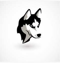 Husky isolated on white vector