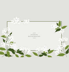 jasmine flower banners design for tea vector image