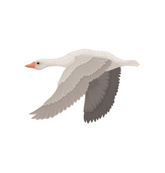 Large gray goose in flying action side view wild vector