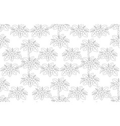 outline of plumeria flower tree top view draw vector image