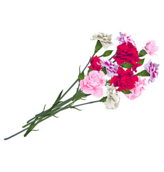Red white and pink carnation flowers bouquet vector