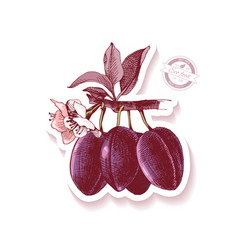 sticker with hand drawn plum branch vector image