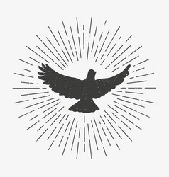 Vintage dove with sunburst pigeon logo symbol vector