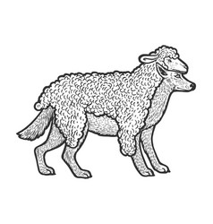 Wolf in sheeps clothing sketch vector