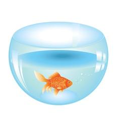 Gold fish in aquarium vector