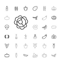 33 vegetable icons vector