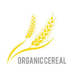 Agriculture wheat logo template logo vector