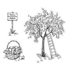Apple tree with a ladder and a basket ripe vector