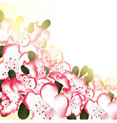 beautiful flower white pink colors vector image